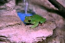 V hodonínské zoo dokončili novou expozici pro žáby.