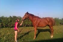 Společnost Smile by horse pomáhá sociálně znevýhodněným dětem trávit volný čas s koňmi.