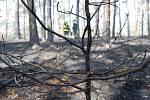 Plameny ohně stromy zcela zničily.