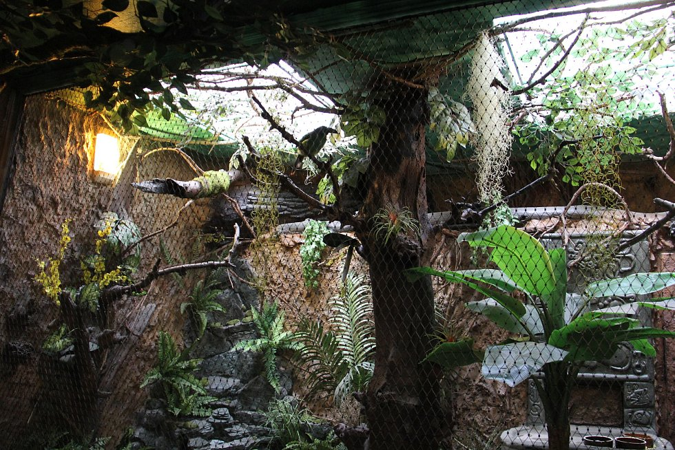 Pestrobarevní opeřenci v zoologické zahradě v Hodoníně už se prohání v novém bydlišti.
