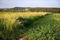 Zemědělec, ekolog Martin Smetana z Blatničky na Hodonínsku postoupil se svými projekty do finále soutěže Adapterra Awards 2019.