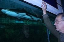 Žralok v Hodonínské zoo.