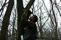 Ohroženým ptákům chtějí dobrovolníci pomoci v Mikulčickém luhu. Už devět let tam proto vyvěšují hnízdní budky. Letos jejich umístění zaměřovali s GPS.