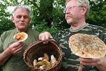 Výjezd ratíškovických mykologů Václava Koplíka a Ladislava Špety byl úspěšný. V košíku nechyběly praváky, bedla vysoká ani léčivá lesklokorka lesklá.