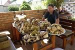 Třiatřicet kilo hub našel v týdnu v lese u Mutěnic Miloslav Belka z Mikulčic.