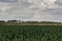 U hodonínské části Pánov poškodilo tornádo elektrické vedení a posekalo les.