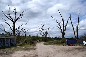 Tornádo, které před několika týdny zpustošilo Břeclavsko a Hodonínsko, nešetřilo ani zeleň.