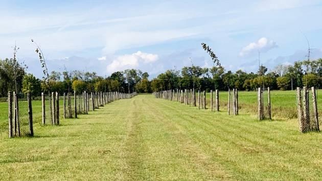 Sto stromů pro naši republiku, sto stromů pro Rohatec.