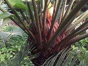 Botanický skleník v Hodoníně. Ilustrační foto.