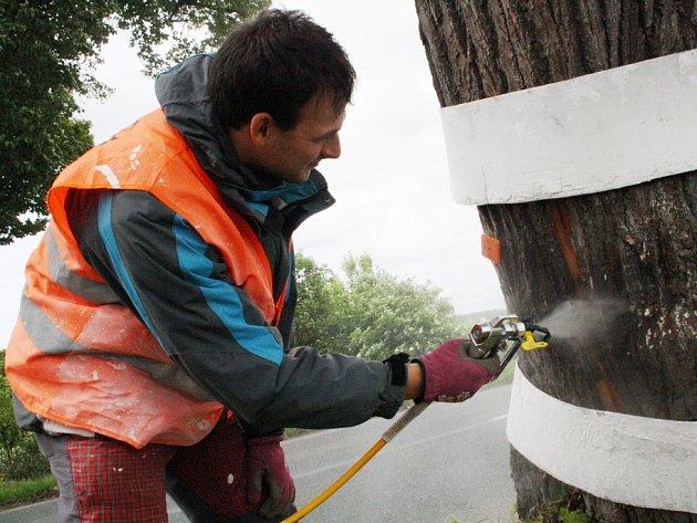 Alej mezi Uherským Ostrohem a Moravským Pískem pomáhaly sdružení Arnika natírat i děti. Stromořadí tvoří především lípy a akáty. Po natření bílou barvou, má být bezpečnější pro řidiče.