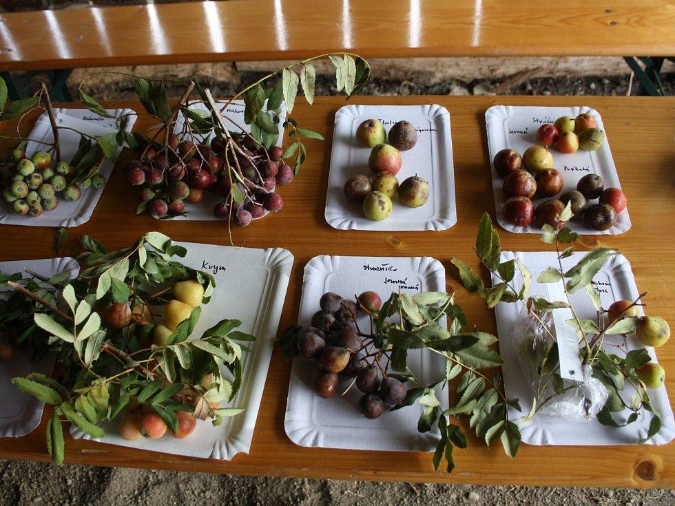 Salaš Travičná u Tvarožné Lhoty hostila další ročník oskerušobraní. Návštěvníci si mohli prohlédnout nový sad i různé odrůdy oskeruší, zkusit ovocný mošt a také oskeruši zakoupit na zasazení.