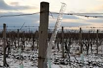 Zima ve vinohradech ve Velkých Bílovicích.