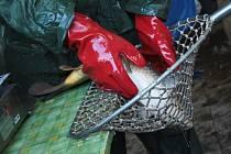 Tradiční výlov vodní nádrže v Blatničce si nenechaly ujít tisíce lidí. Někteří nakupovali ryby na štědrovečerní stůl.