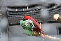 Den ptactva v Zoo Hodonín.