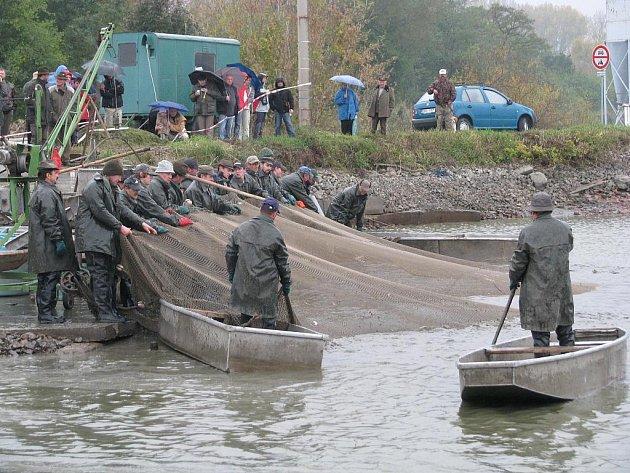 Výlov rybníku Dvorský v roce 2009 - ilustrační foto.