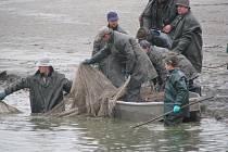 Výlov rybníku Dvorský 2009