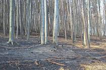 Ještě v noci na pondělí na kopci Hradisko u Javorníka hasiči kontrolovali situaci po nedělním požáru v tamním lese. Plameny se rozšířily na osm hektarů porostu, záchranáři museli ošetřit jednoho zraněného a vyčíslená škoda činí asi jeden milion korun.