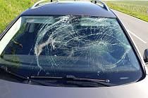 Následky srážek aut s lesní zvěří v posledních týdnech na Hodonínsku.