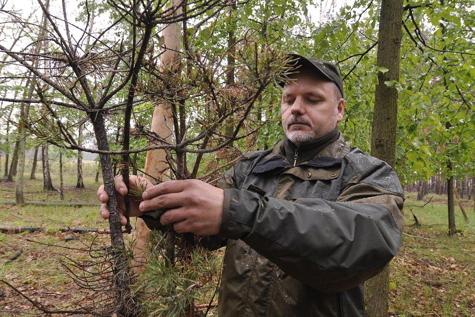 Miliony chroustů se právě rojí v lesích Moravské sahary na Hodonínsku. Spásají listy stromů a kladou do půdy vajíčka. Larvy ohrožují na osm tisíc hektarů lesa. Postřik však zatrhli ochránci přírody. Lesníci označili stav za kalamitní. Tomáš Crhonek z lesn