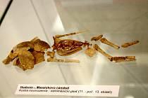 Výstava Ukryto pod zemí představuje nejnovější archeologické nálezy z Hodonína, a to v místním Regionálním centru.