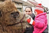 Letos poprvé se konala tříkrálová sbírka s průvodem ve Starém Poddvorově. Mladé koledníky v krojích a stylových šatech doprovodila dvojice velbloudů.