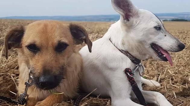 Rodina z Blučiny se ujala hned dvou psů - fenky Žofky a pejska Rezáčka. Předchozímu majiteli byli zabaveni kvůli týrání.