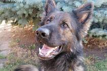 Holčička zmizela z pískoviště. Vyčenichal ji policejní pes Majk.