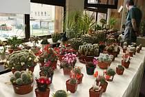 Výstava kaktusů v Hodoníně.