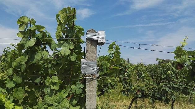 V Prušánkách střeží vinohrady čtyři nové meteostanice, hlídají podmínky pro výskyt chorob.