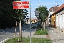 Nově vysazené stromy v ratíškovické ulici Vítězná.