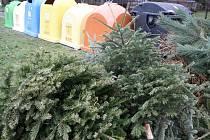 Vyhozené vánoční stromky v Očovské ulici v Hodoníně.