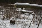 Tým z Mendelovy univerzity zkoumá vliv bobra na lesní hospodářství. Na snímku je situace poblíž Mikulčic.