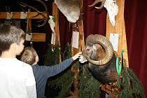 Chovatelskou přehlídku loveckých trofejí zvěře ulovené v sezoně 2014 – 2015 připravil Okresní myslivecký spolek Hodonín.