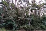 Les na katastru Vacenovic naproti drůbežárny.