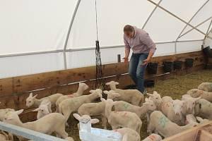 Chovatel ovcí Ondřej Pavlinec z Velké nad Veličkou