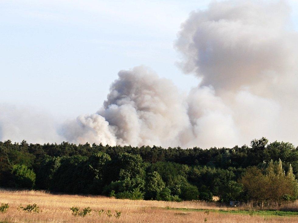 Inferno zažili živočichové v borovém lese na Bzenecku na jaře 2012. Žár spálil mnohé.