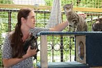 Občanské sdružení Kočky SOS Hodonín.