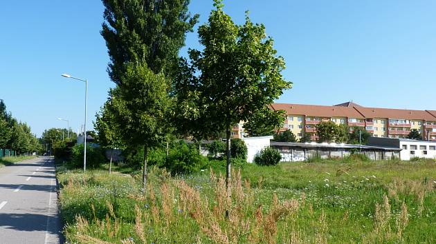 V mnoha částech Hodonína se výška trávy blíží půl metru. To dělá problém jak alergikům, tak i pejskařům.