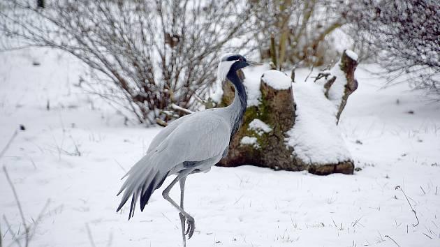 Zvířata v Hodonínské ZOO si užívají první sníh. FOTO: Josef Petrica