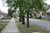 Současný stav stromořadí v Mírové ulici v Rohatci.