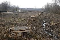 Nezákonně pokácené stromy u Jarohněvického rybníka u Dubňan.