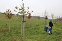 Alej života v Kyjově završí strom s číslem 100