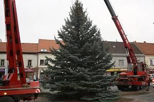 Vánoční strom Kyjovu darovali manželé Mynářovi z Vřesovic,