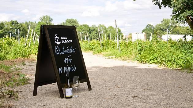 Víno ochutnají ve vinici ve Veselí