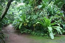 Zahrada v nemocnici