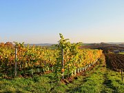 Když byl menší, chodíval s dědečkem do vinohradu. Později se rozhodl vinařinu vystudovat. Jiří Ambrož se zaměřuje nejen na víno, ale také na gastronomii.