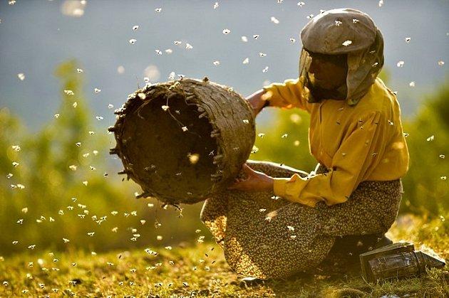 Film zavede do Země medu