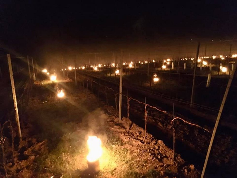 Rodinné vinařství Grmolec z Hovoran se snažilo ochránit své vinohrady před mrazem pálením balíků slámy.