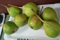 Genofondový sad vznikl ve Velké nad Veličkou v roce 1991. Od té doby v něm dvakrát do roka radí Ladislav Tomčala radí zahrádkářům jak roubovat tradiční odrůdy ovocných stromů.