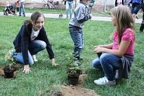Dubňany jsou bohatší o třicet malých habrů, dva vzrostlé platanya jeden vzrostlý dub.